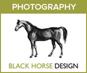 Black Horse Design Photography (West Yorkshire Horse)